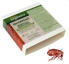 Beneficial nematodes for controlling fleas