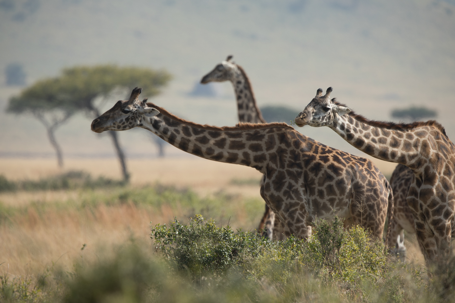 featured image of post: John Greengo's Top Safari Tips