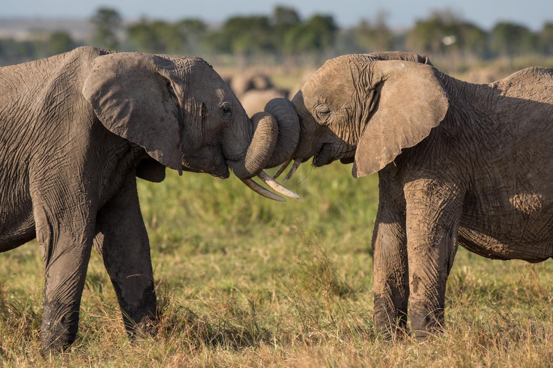 image taken in Tanzania and Kenya