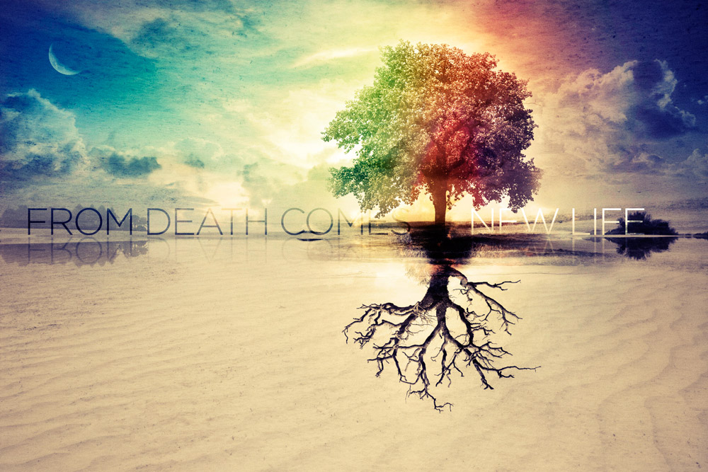 From Death Comes New Life