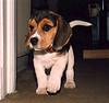 Jimi, mi perro - my dog por Rod Chile