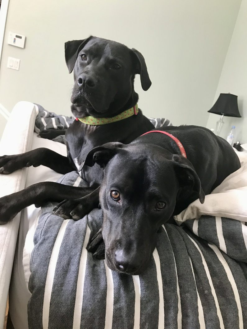 Scout and Savannah