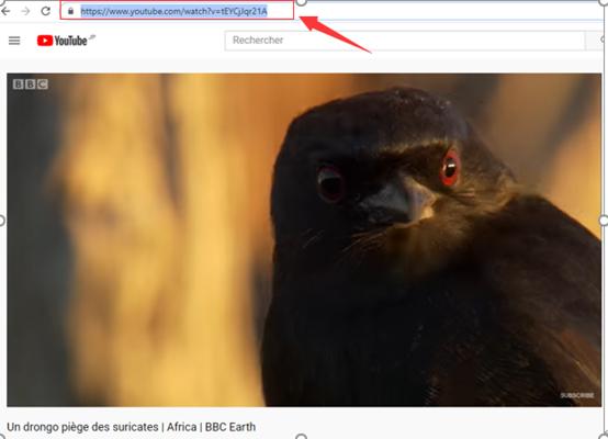 Copier l'adresse de la vidéo YouTube à enregistrer