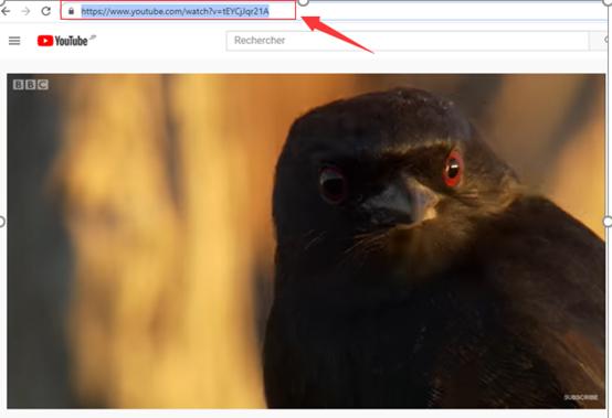 Copiare l'indirizzo del video di YouTube da registrare