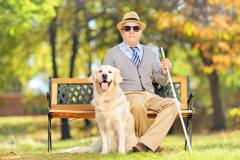 Blind man seated on a park bench with his cane and guide dog