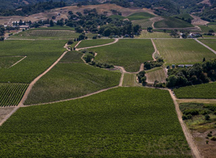 Bow Tie vineyard aerial view.