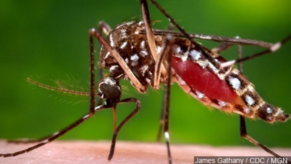 More West Nile Virus activity reported in Iberia Parish