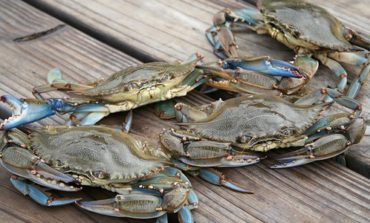 A Look at How the Blue Crab Ban is Effecting Local Restaurants During Lent