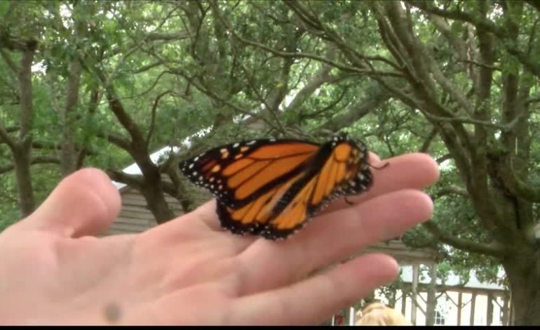 Heart of Hospice Honors Loved Ones With Butterfly Release
