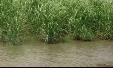 Iberia Parish Farmer Finds Crops Underwater After Tropical Storm Cindy