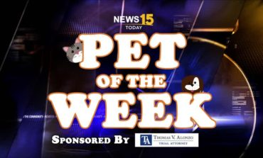 Check Out This Week's Pet of the Week!