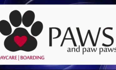 Dog Grooming Tips From Paws and Paw Paws