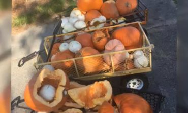 Church pumpkin patch vandalized over the weekend