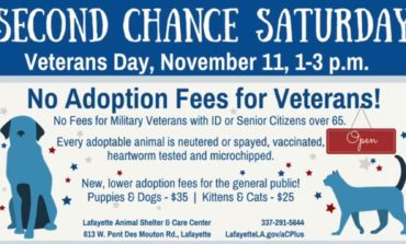 Pet Adoption Fees Waived for Veterans