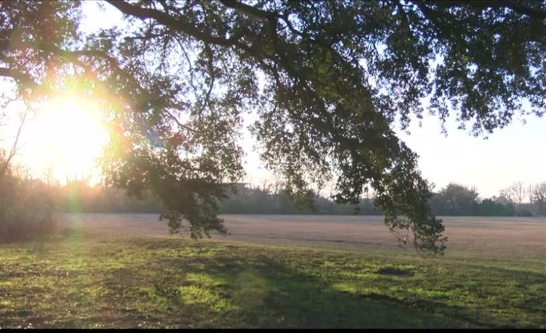 Moncus Park Groundbreaking Anticipated For End Of January