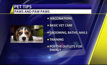 Tips for New Pet Owners