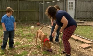 Pet of the Week: Crystal and Robert