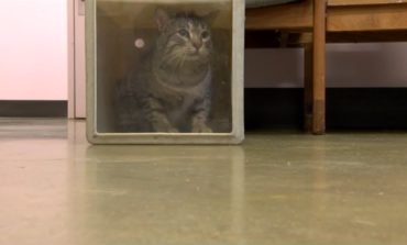 Pet of the Week: Casey and Art