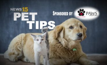 PET TIPS: Selecting the Right Collar or Harness