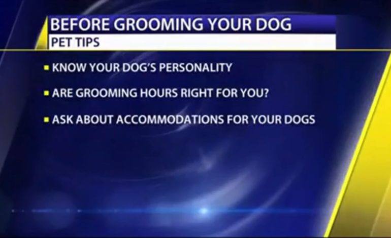 Pet Care Tips: Grooming Do's and Don'ts
