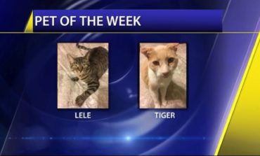 Pet of the Week: Lele and Tiger