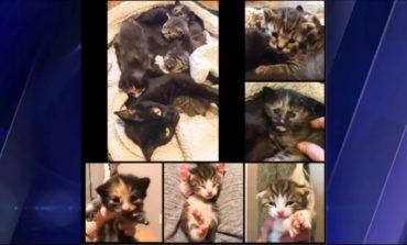 Pet of the Week: Beth and kittens