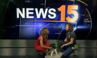 ZenDog Training hosts camp for kids and dogs