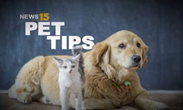Pet Tips: Grooming Your Pets