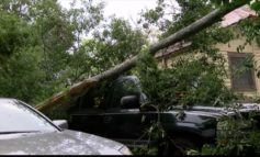 Three children injured when tree snaps during family gathering in Opelousas