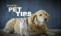 News15 Today Pet Tips: Greeting a Dog