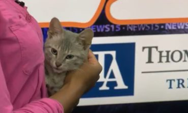 Pet of the Week: Tea and Dasher