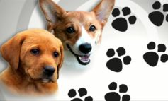 Breaux Bridge Tractor Supply hosting animal adoptions and pet supplies drive