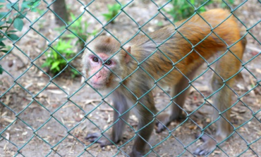 SAEN Calls for New USDA Fine Following 8 Monkey Jailbreak in 2018 at UL