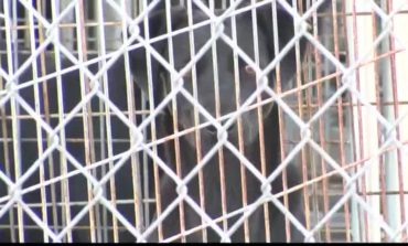 Multiple Dogs Euthanized After Distemper Outbreak At St. Landry Parish Animal Shelter
