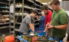 Smithsonian museum the new home for UL Lafayette crustacean collection