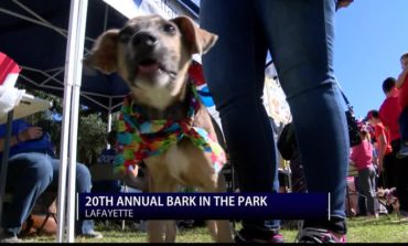 20th Annual Bark in the Park
