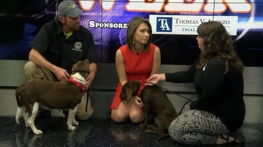 Pet of the Week: Dog Edition, Alpha and Bennetta