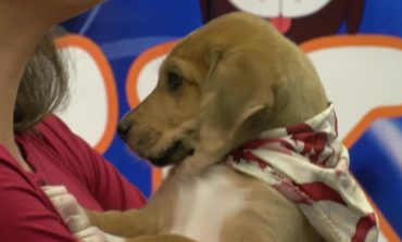 Puppy of the Week: Taj