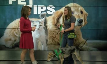 Pet Tips: How to prepare before bringing home a puppy