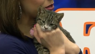 Kitten of the Week: Klondike!