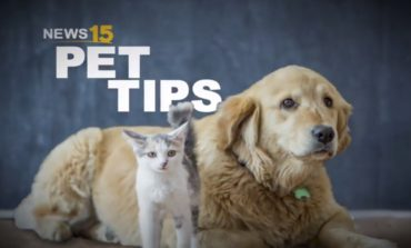 """National Pet Training Month: How to teach your dog the """"targeting"""" skill"""
