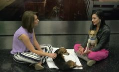 SLPAC Pets of the Week: Creole and Freya, two terriers looking for a permanent couch to lounge on.