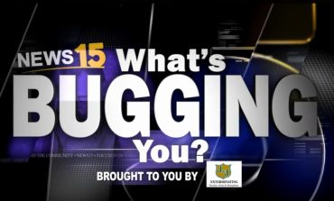 What's Bugging You: People who don't pick up after their pet