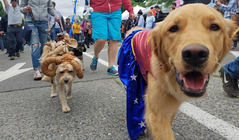 Krewe Des Chiens Dog Parade to roll tomorrow afternoon