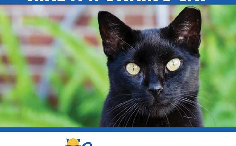Lafayette Animal Shelter and WildCat Foundation/SpayNation Launch Cats Clocking In Program