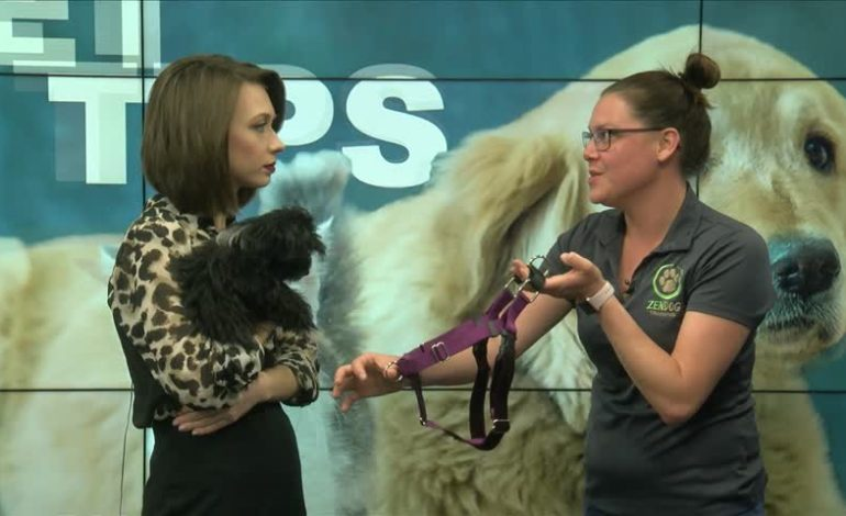 Pet Tips with Zendog! The different types of harnesses for your pup