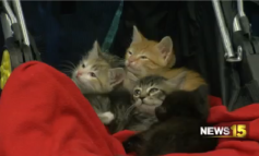 Pet of the Week: Kittens Galore!