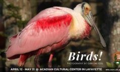 Acadian Cultural Center Hosts Birds, Birds, and More Birds!