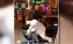 Easter Bunny Gets Into Fight in Orlando