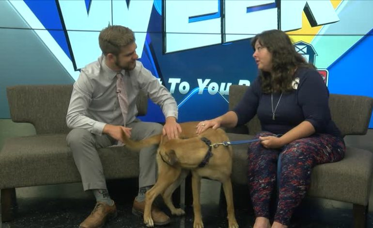 Pet Of The Week: Dogs Pt.1